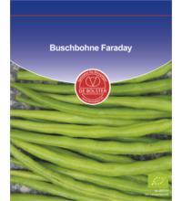 DE Bolster Buschbohne Faraday GP, 50 gr Tüte