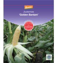 DE Bolster Zuckermais 'Golden Bantam', 1x 15 gr Tüte