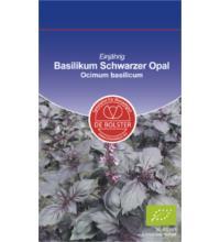 DE Bolster Basilikum rot KP Schwarzer Opal , 1 gr Tüte